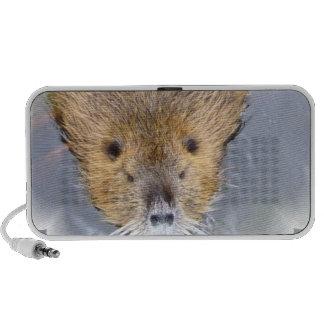 Beaver Speakers