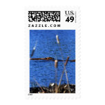 Beaver Stamps Postage Stamps