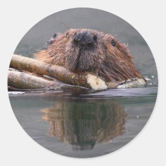 beaver classic round sticker