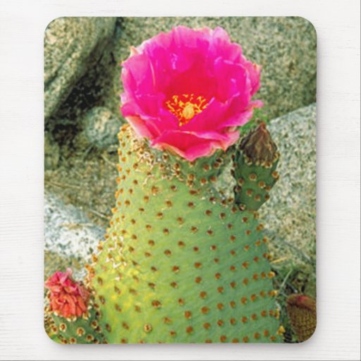 Beaver tail Cactus Mouse Pad