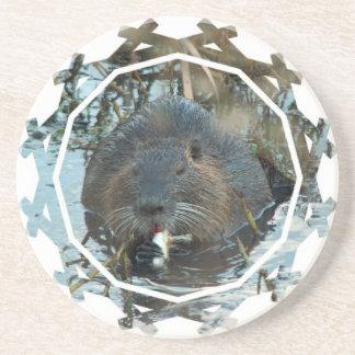 Beavers Habitat Coasters
