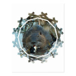 Beavers Habitat Postcard