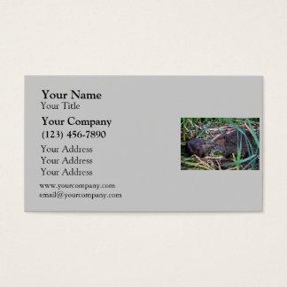 Beavers Kissing Photo Business Card