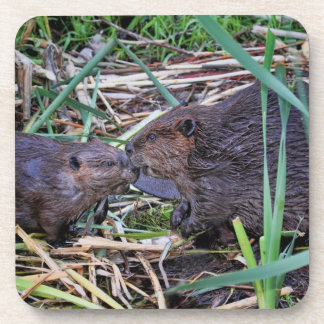 Beavers Kissing Photo Coasters