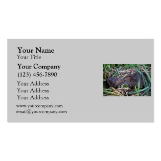 Beavers Kissing Photo Double-Sided Standard Business Cards (Pack Of 100)