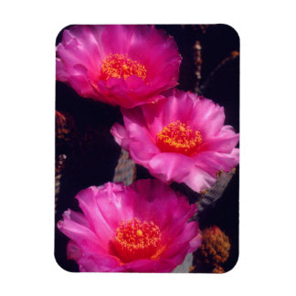 Beavertail Cactus Flowers 2 Magnet