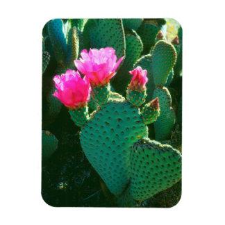 Beavertail Cactus Flowers Magnet
