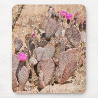 Beavertail Cactus Mouse Pad