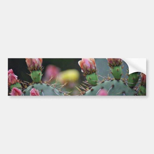 Beavertail Cactus Pink flowers Bumper Stickers