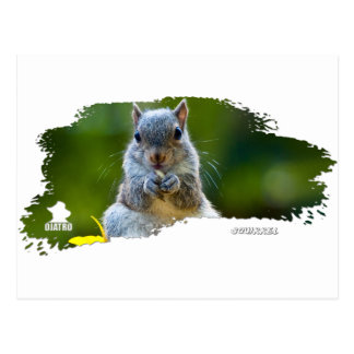 Bebé 01 de la ardilla tarjeta postal