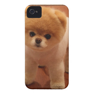 Bebé adorable del perrito del mascota del perro de iPhone 4 cárcasas
