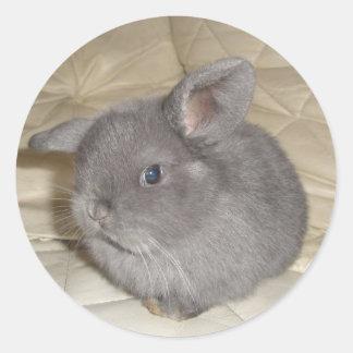 Bebé adorable mini Lop Etiqueta Redonda