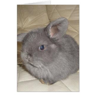 Bebé adorable mini Lop Tarjetón