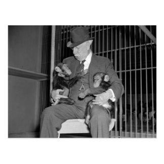 Bebé Chimpanzees, 1938 Postales