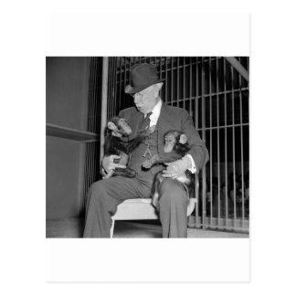 Bebé Chimpanzees, 1938 Tarjeta Postal