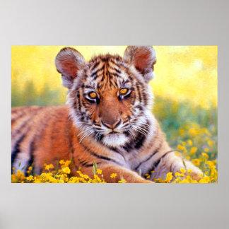 Bebé Cub del tigre Posters