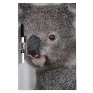Bebé de la koala pizarras blancas