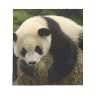 Bebé de la panda gigante (melanoleuca del Ailuropo Bloc De Notas