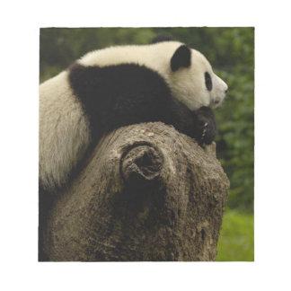 Bebé de la panda gigante (melanoleuca del Ailuropo Libreta Para Notas