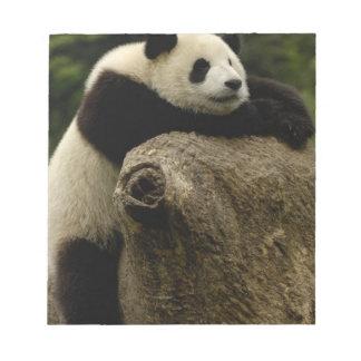 Bebé de la panda gigante (melanoleuca del Ailuropo Blocs De Notas