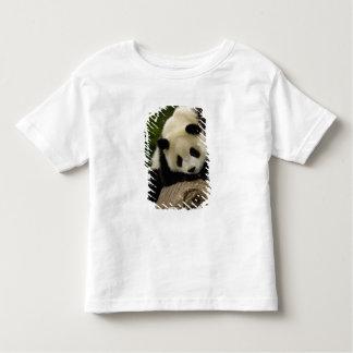 Bebé de la panda gigante (melanoleuca del playera
