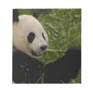 Bebé de la panda gigante que come el bambú (Ailuro Bloc De Papel
