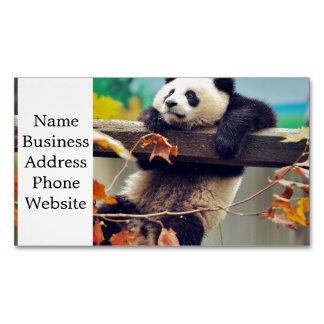 Bebé de la panda gigante sobre el árbol tarjetas de visita magnéticas (paquete de 25)