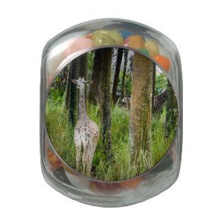 Bebé de la selva jarrones cristal