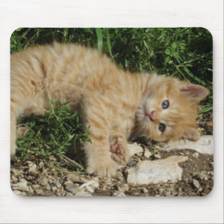 Bebé de reclinación del Tabby Mousepads