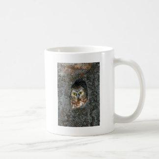 bebé del árbol del búho dentro taza de café