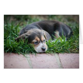 Bebé del beagle en hierba tarjeta de felicitación
