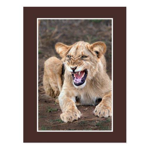 Bebé del cachorro de león postal