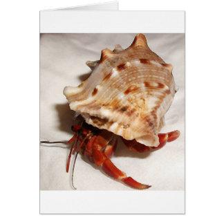 Bebé del cangrejo de ermitaño de los violascens de tarjeta de felicitación