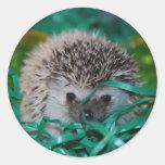 Bebé del erizo en la hierba de Pascua Etiqueta