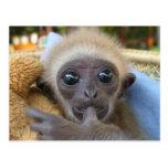 Bebé del Gibbon Postal