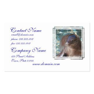 Bebé del león marino tarjetas de visita
