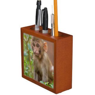 Bebé del macaco de la India, templo del mono,