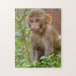 Bebé del macaco de la India, templo del mono, Puzzle