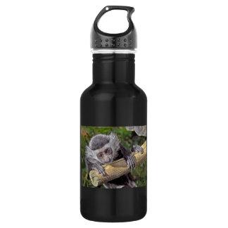 Bebé del mono de Colobus del mono
