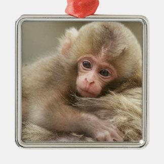 Bebé del mono de la nieve, Jigokudani, Nagano, Adorno Cuadrado Plateado