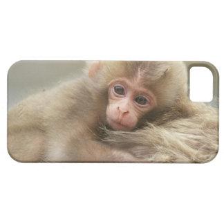Bebé del mono de la nieve, Jigokudani, Nagano, iPhone 5 Cárcasas