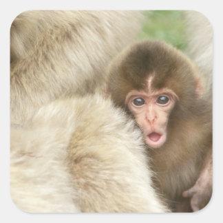 Bebé del mono de la nieve, Jigokudani, Nagano, Pegatina Cuadrada