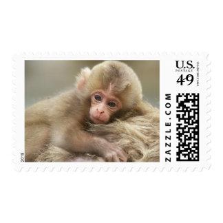 Bebé del mono de la nieve, Jigokudani, Nagano, Timbres Postales