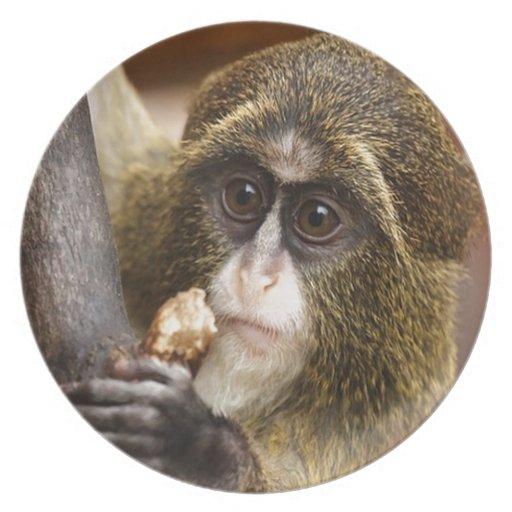 bebé del mono plato de comida