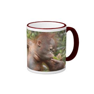 Bebé del orangután en Borneo Taza De Dos Colores