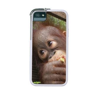 Bebé del orangután que soña con mamá