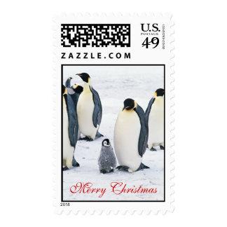 Bebé del pájaro del pingüino en el navidad hermoso