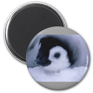 bebé del pingüino imán redondo 5 cm