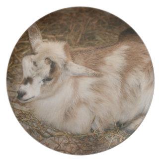 Bebé doeling de la pequeña cabra peluda platos para fiestas