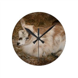 Bebé doeling de la pequeña cabra peluda relojes